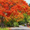 Mauritius_3